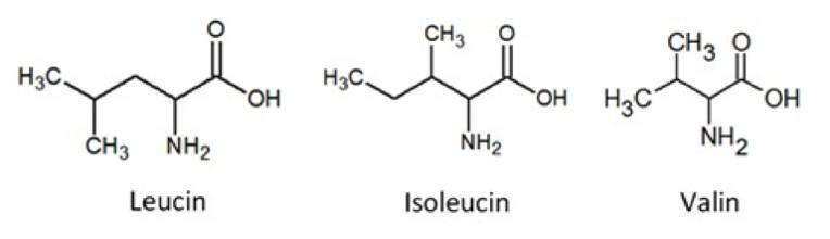 aminosyre under træning