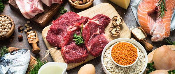 animalsk protein