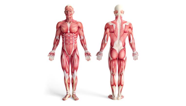 hvordan fungere kroppen