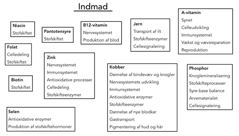 Figur over indmad